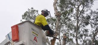 Image result for Arborist Newcastle images