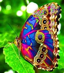 Image result for пеперуди