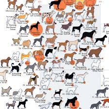 What Dog Breed Has The Best Temperament Aaa State Of Play