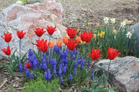 best flowering bulbs for your rock garden