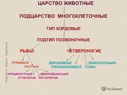 Презентация на тему Курсовая работа учителя по биологии  2 ЦАРСТВО ЖИВОТНЫЕ ПОДЦАРСТВО
