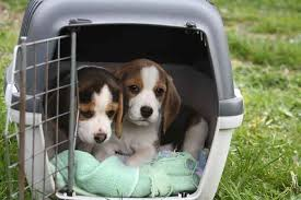 how to soundproof a dog crate and stop
