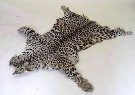 cheetah skin rug a real