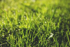 green grass field. Free Images : Water, Nature, Dew, Blur, Field, Lawn, Meadow, Prairie, Sunlight, Leaf, Flower, Green, Close Up, Focus, Droplets, Grassland, Raindrops, Drops, Green Grass Field