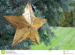 Goldener Stern In Einem Weihnachtsbaum Stockbild Bild Von