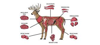 Deer Butcher Chart The Best Ways To Cook Every Cut Of Venison Outdoor Life