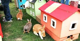 a one acre rabbit sanctuary is coming to metro houses for bunnies