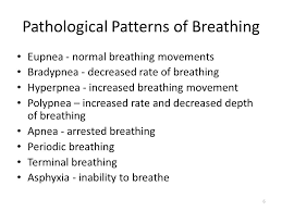 Types Of Breathing Patterns Pathophysiology Of External Breathing Hypoxia Ppt Video Online