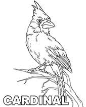 Tweety bird first appeared in the animated short named a tale of two kitties in 1942. Bird Coloring Pages To Print Topcoloringpages Net