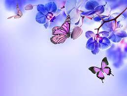 140+ 4K Ultra HD Butterfly Wallpapers ...