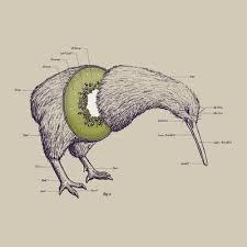Kiwi Bird Size Chart Www Bedowntowndaytona Com