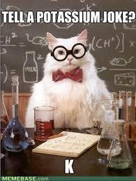 Chemistry Cat | Know Your Meme via Relatably.com