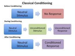 classical conditioning ao ao ao psychology wizard after conditioning the ns becomes a conditioned stimulus cs because it produces the same reaction from us that the ucs used to produce