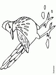 Small Picture texas roadrunner bird coloring pages Roadrunner Pinterest