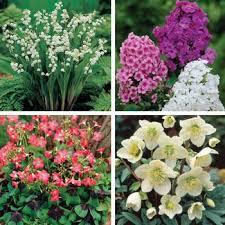 All Season Perennial Garden