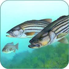 Amazon Com Fishing Fanatic Fishing App With Solunar