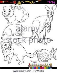 Small Picture Cartoon Illustration Cute Bandicoot Bilby Stock Photos Cartoon