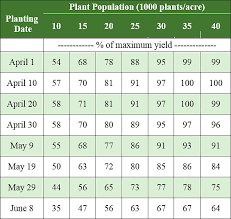 Corn Hail Decision Guide Pioneer Seeds