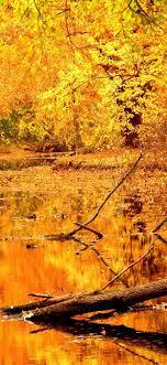 Scenery natural yellow