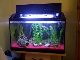 Fish Tank Coffee Table Uk Fish Tanks Uk Affordable L Corner Aquarium Fish Tank London North