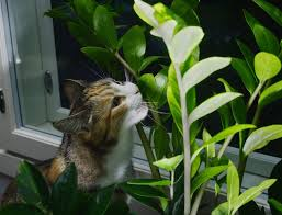 keep cats out of indoor plants