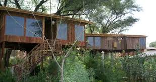 tree house jaipur. Tree House Resort Jaipur
