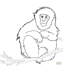 Howler Monkey Clipart Outline Free Clipart On Dumielauxepicesnet