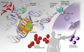 Genome Editing Genome Editing And Gene Therapy New Opportunities To Correct