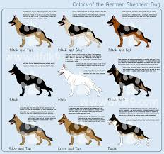 white and black german shepherd. Brilliant And German Shepherd Colors By MauserGirl  Inside White And Black P