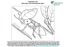 Leafcutter Ant Coloring Page Rainforest Alliance