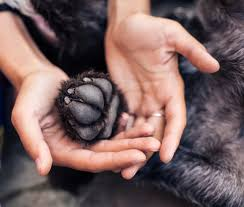 paw care taking care of your dogs feet
