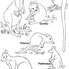 Small Picture Pademelon Animal Coloring Pages Parma Wallaby nebulosabarcom
