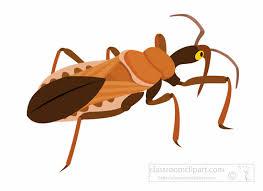 bug clipart. assassin-bug-insect-clipart.jpg bug clipart o