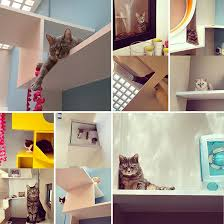 aristide hotel for urban cats brings catification to paris urban cat tree a55