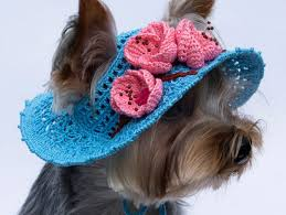 Crochet Dog Hat Pattern Gorgeous 48 Cool Dog Hats For Dogs Of All Shapes And Sizes