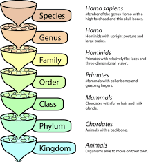 Biological Classification Chart Classification Read Biology Ck 12 Foundation