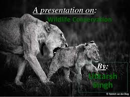 wildlife conservation in ppt  by utkarsh singh a presentation on wildlife conservation