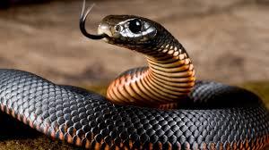 значение татуировки змея вконтакте