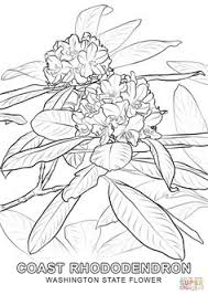 Small Picture Click the South Dakota State Flower coloring pages to view