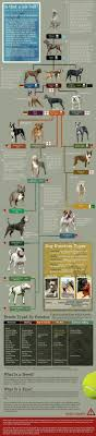 Dog Chart Pitbull Terrier Bully Dog Dog Breeds
