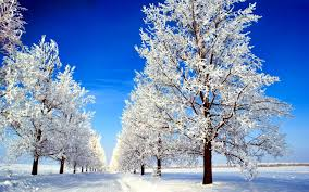 winter trees wallpaper hd. Modren Wallpaper HD Wallpaper  Background Image ID337604 On Winter Trees Hd E