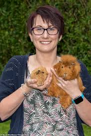 Woman With 52 Guinea Pigs Says She Has 'Fallen In Love' With Pets