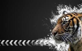 white tiger wallpaper desktop.  Wallpaper Top 100 Full HD Tiger Wallpapers In White Wallpaper Desktop