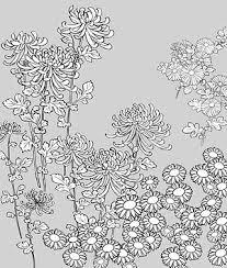 ベクター線画花 27wild Chrysanthemum の 無料素材イラスト