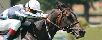 """Résultat de recherche d'images pour """"image chevaux de course"""""""