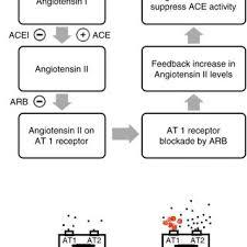 Renin Angiotensin System Mechanisms Behind Arbinduced