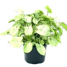 common house plants images household with pictures poisonous houseplants for dogs of and names hou