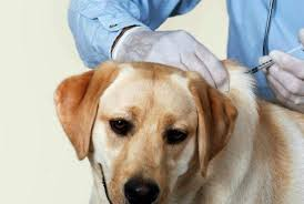 parvo is a deadly canine virus that infects many dogs every year there is a vaccine and treatments for dogs who have contracted the virus as well as