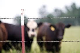 barbed wire fence cattle. Barbed Wire Fence Cattle E