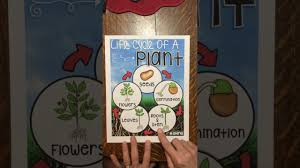 Life Cycle Of A Plant Anchor Chart